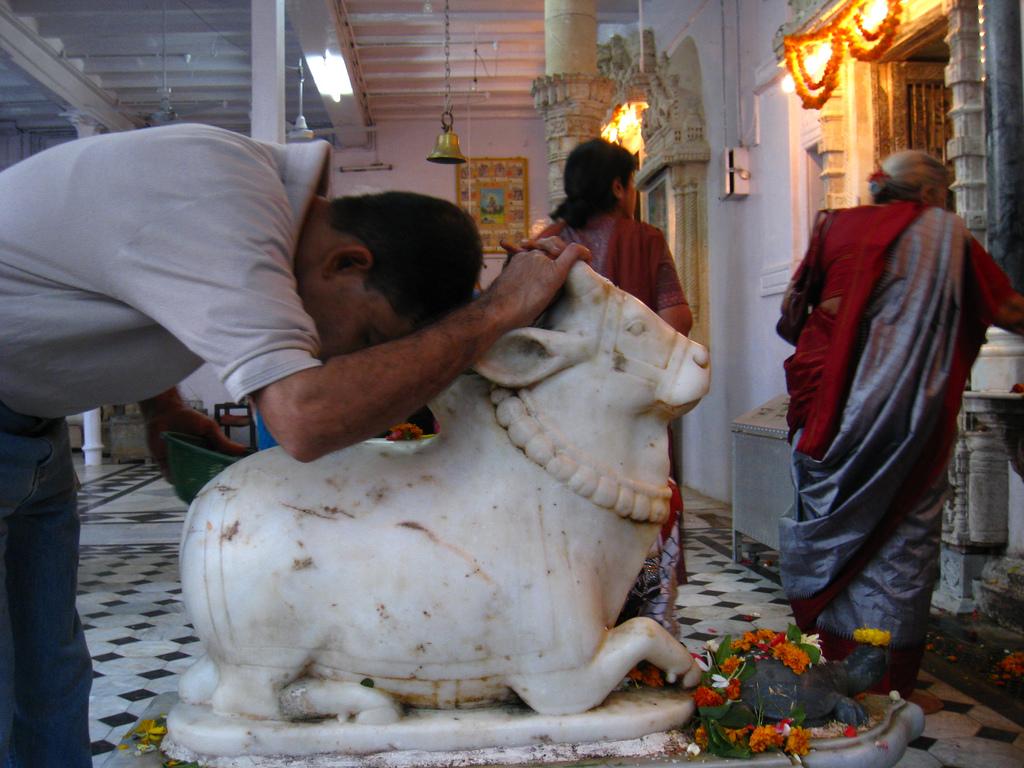 7 سبع كوابيس هندية.....هزت عرش المارخور الباكستاني  - صفحة 6 Cow-worship